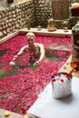 Woman relaxing in flower petal covered pool at spa smiling to camera Royalty Free Stock Photos