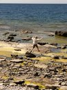 Woman on rocky shore Stock Image