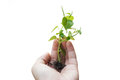 Woman s hand holding baby tree Royalty Free Stock Photography