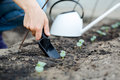 Woman's hand transplanting a small plant with shovel. Royalty Free Stock Photo