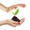 Woman s hands are holding green plant on white background close up Stock Photos