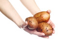 Woman`s hands holding potatoes isolated on white background Royalty Free Stock Photo