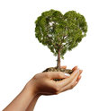 Woman s hands holding soil with a tree heart shaped viewed from side on white background Royalty Free Stock Images