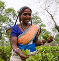 The woman's portrait - collectors of tea from the nearby village. Royalty Free Stock Photo