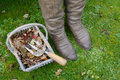 Woman s winter boots next to a basket of autumn leaves closeup with dirty garden hand fork Royalty Free Stock Photo