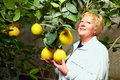 Woman selecting the best fruit in greenhouse Royalty Free Stock Images