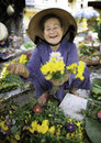 Woman selling yellow flowers flower market hoi vietnam Royalty Free Stock Photos