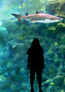Woman and shark silhouette of a standing in front of a coral Stock Photography