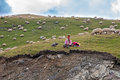 Woman shepherd with her sheeps and dog in the mountains near transalpina road in romania Royalty Free Stock Images