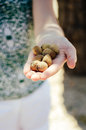 Woman showing hand fulll of almonds Royalty Free Stock Photo