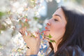 Woman smell cherry tree flower outdoor portrait Stock Photos