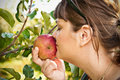 Woman smelling an apple on a tree caucasian fuji while still the Stock Image