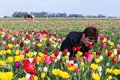 Woman smelling flowers in a Dutch tulip field Royalty Free Stock Photo