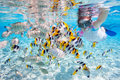 Woman snorkeling with tropical fish in clear waters among colorful Royalty Free Stock Image