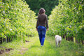 Woman strolling with her dog in the orchard Stock Images