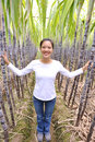 Woman in sugarcane field Stock Image