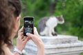 Woman takes pictures of gray cat on the phone in the park Royalty Free Stock Photos