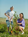 Woman with  teenager son setting tree Stock Photos