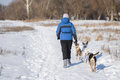 Woman with three dogs walking on a snow covered earth road Royalty Free Stock Photo