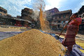 Woman threshing grain in traditional way in nepal bhaktapur october unidentified the pottery square of bhaktapur the city is part Stock Photos