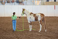 Woman training her horse a paint in an indoor arena Royalty Free Stock Image