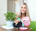 Woman transplants Kalanchoe in flowerpot Stock Photography