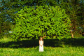 Woman and tree the in white clothes near a Royalty Free Stock Image
