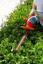 Woman trimming bushes in her backyard using an electrical hedge trimmer Stock Photos