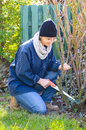 Woman using saw in garden adult working small hand for cleaning roses bush Stock Photos