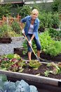 Woman vegetable garden Royalty Free Stock Photo