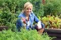Woman vegetable garden Royalty Free Stock Photo