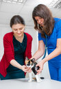 Woman vet consults cat owner in clinic Stock Photography