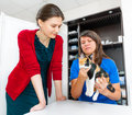 Woman vet consults cat owner in clinic Royalty Free Stock Image