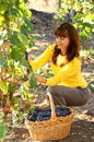 Woman in vineyard Stock Images