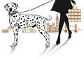 Woman walking a dalmatian dog illustration of her with background of the houses of parliament london bridge and london bus Royalty Free Stock Photo