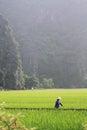 Woman Walking Through a Field in Vietnam Royalty Free Stock Photo