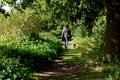 Woman walking in the green forest with her dog Royalty Free Stock Photo