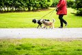 Woman walking her dogs in the park Royalty Free Stock Photo
