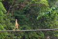 Woman walking on jungle bridge Royalty Free Stock Photo