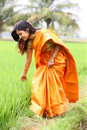 Woman walking in the paddy field Stock Images