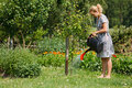 Woman watering apple tree Stock Image