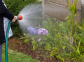 Woman watering the garden and flowers Royalty Free Stock Photography