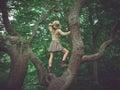 Woman wearing safari hat climbing tree Royalty Free Stock Photo