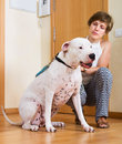 Woman with white big dog young on leash indoor focus on Royalty Free Stock Photography