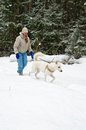 Woman with a white dog on a walk in woods during a snowfall the Stock Photography