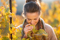 Woman winegrower inspecting grape vines in autumn vineyard