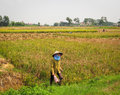 A woman working on the field at Mong Duong town in Hagiang, Vietnam Royalty Free Stock Photo