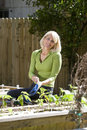 Woman working on vegetable garden in backyard Royalty Free Stock Images