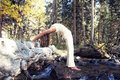 Woman yoga urdhva danurasana posture fallen tree river Royalty Free Stock Images