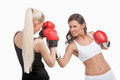 Women boxing two young confident while isolated on white Stock Images